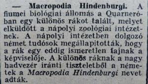 Macropodia Hindenburgi. Az Est, 1915. március 9.